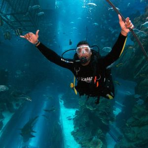 Dubai Mall Aquarium Certified Diver