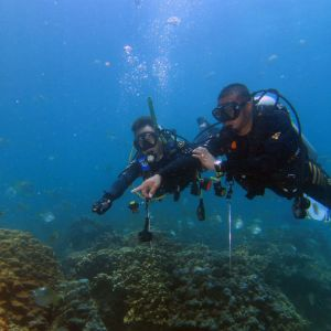 Discover Scuba Diving in Fujairah - 2 Dives